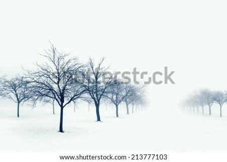 Trees in snow - stock photo