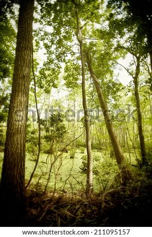Trees in Swamp - stock photo