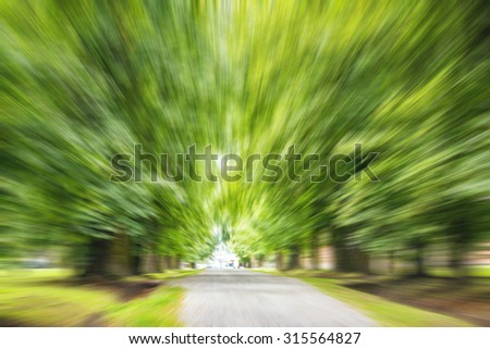 Trees in the alley in the park. Radial zoom effect defocusing filter applied. - stock photo