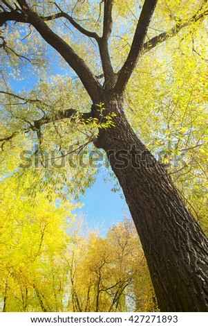 trees  in the autumn forest and sunny morning light - stock photo