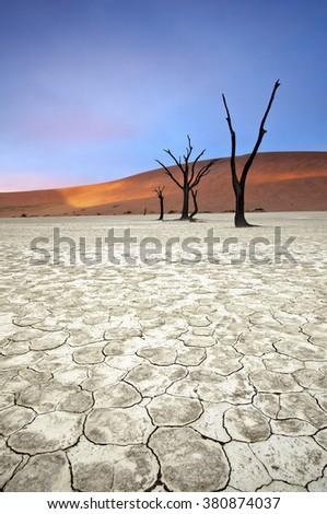 Trees in the Deadvlei area of Sossusvlei, Namibia. - stock photo