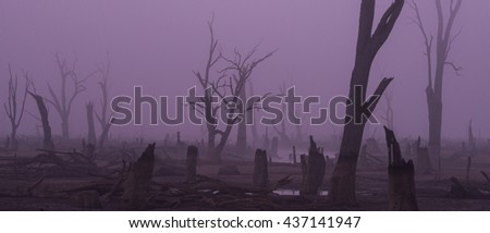 Trees in the fog - a moody shot of dead trees in Lake Mulwala. It was shot in the purple light of dawn while a heavy fog covers the ground. Large puddles of water reflect the purple light. soft focus - stock photo