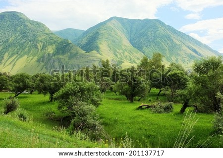 Trees in the mountain valley, Altai, Russia. Harmony mountain landscape.  - stock photo