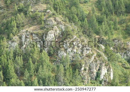 trees in the mountains in nature - stock photo