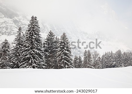 Trees in the snow on a foggy day in the Swiss Alps. - stock photo