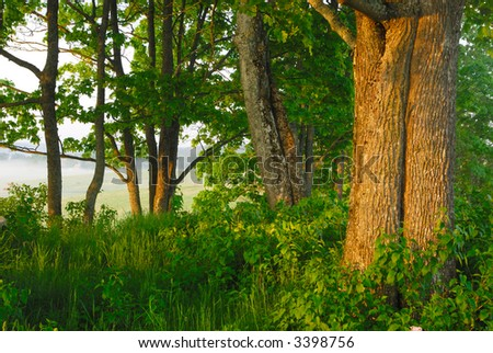 Trees in the spring morning - stock photo