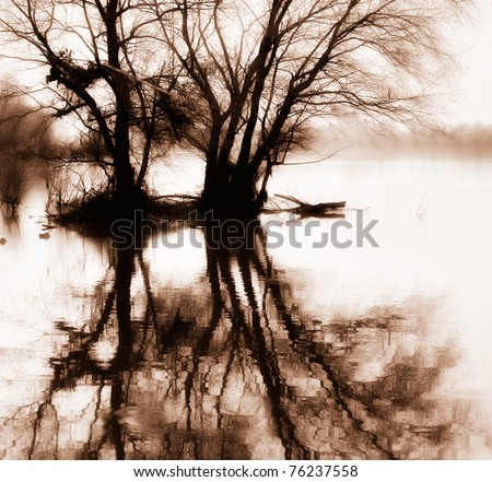 trees in the water with the reflection in sepia - stock photo