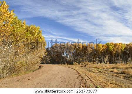 Trees in Vibrant Fall Colors along Gravel Road - stock photo