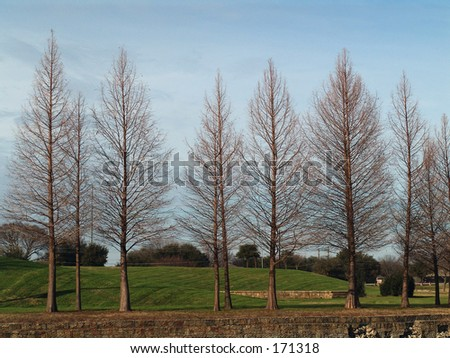 trees in winter - stock photo