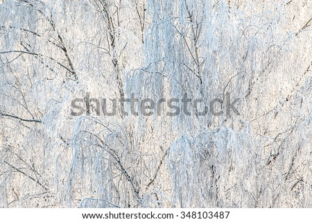 Trees in winter. Birch branches covered by white frost. White Christmas background, copy space. - stock photo