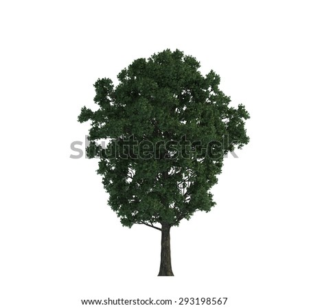 Trees iSolated Collection - stock photo