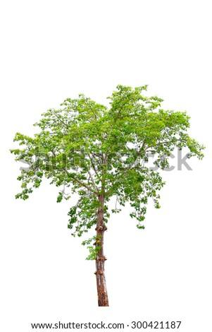 Trees isolated on white - stock photo