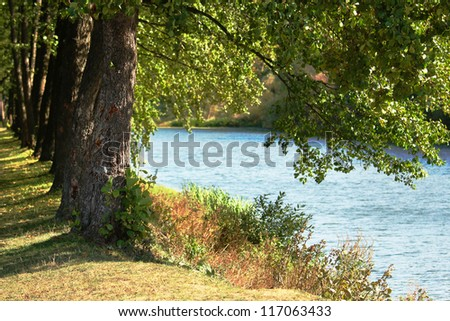 trees near lake  in nature - stock photo