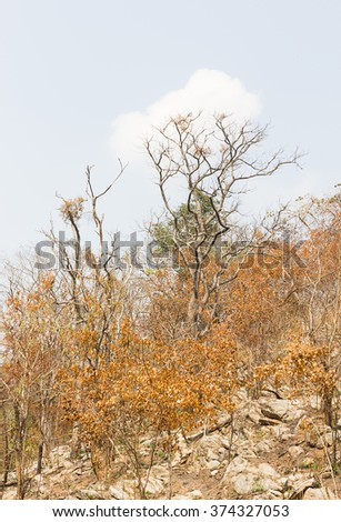 Trees on a mountain after a forest fire - stock photo