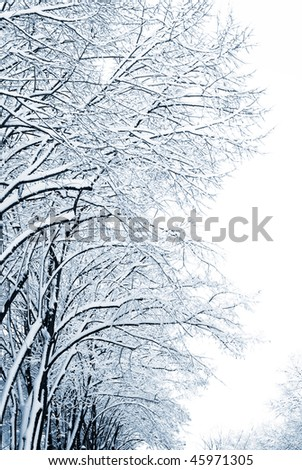Trees on city streets after a snowfall - stock photo