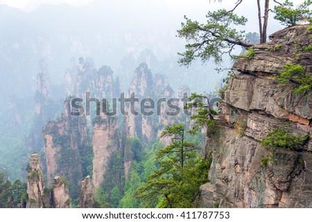 trees on rocks in Zhangjiajie National Park in Hunan, China - stock photo