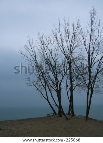 trees on sand over water - stock photo