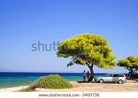 Trees on the beach. People in vacation. - stock photo