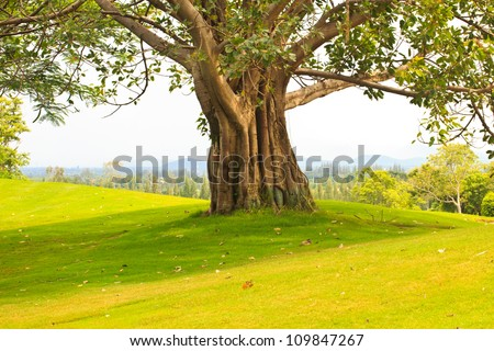 Trees on the golf course - stock photo