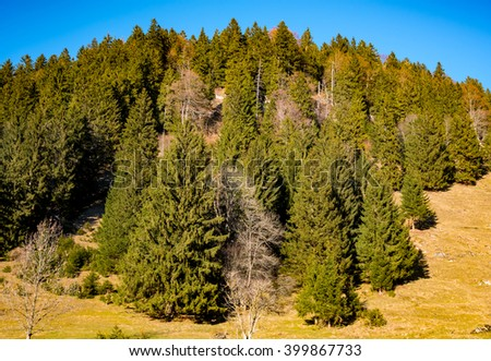 trees on the hillside  with blue sky background - stock photo