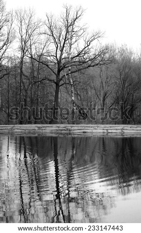trees reflected in a pond on a background of gray autumn sky - stock photo