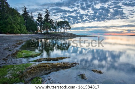 Trees reflected in coastal waters at sunrise. - stock photo