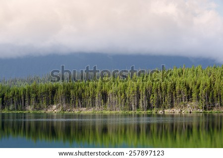 trees reflected in the Athabasca River in Canada - stock photo