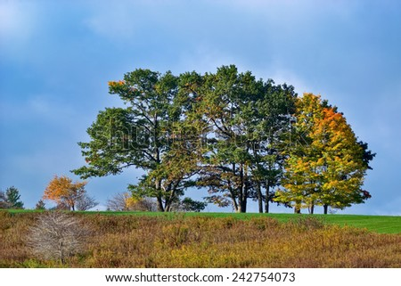 Trees Starting to Change Color in Early Autumn - stock photo