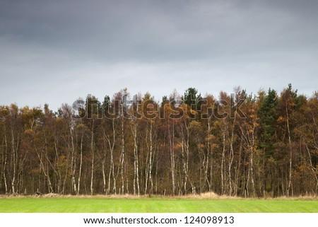 Trees, UK. - stock photo