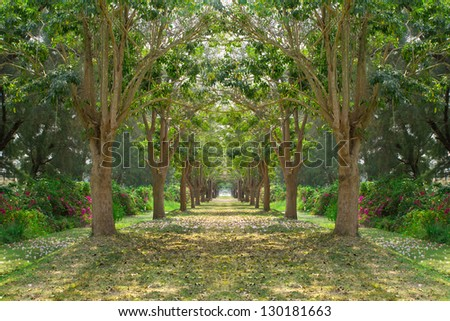 Trees way in the park - stock photo