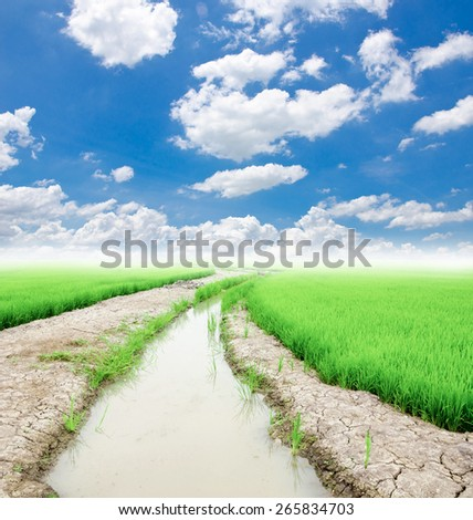 Trees with a ditch of water use in rice farming and blue sky - stock photo