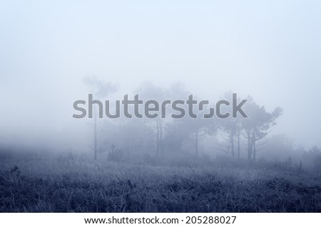 trees with fog and vintage filter effect - stock photo