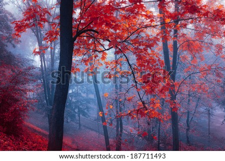 trees with red leaves in blue mist at autumn park - stock photo