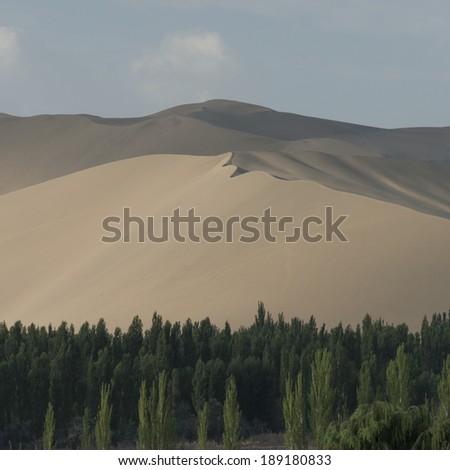 Trees with sand dunes at Mingsha Shan, Dunhuang, Jiuquan, Gansu Province, China - stock photo