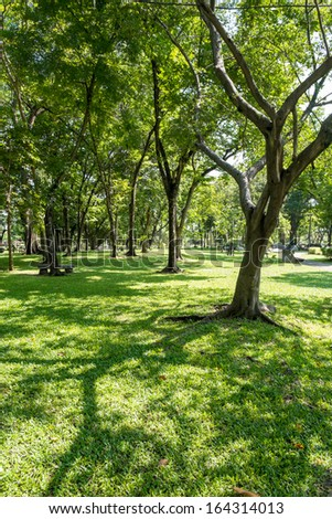 Trees with shadow in public park - stock photo