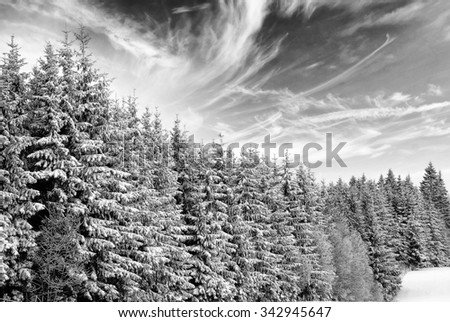 trees with snow in winter - stock photo