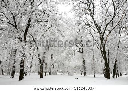 Trees with snow in winter park - stock photo