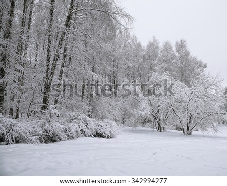 Trees with snow in winter park. Snow-covered trees - stock photo