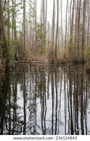 Trees with Spanish Moss hanging from the branches and swamp water, from the Okefenokee Swamp in South East Georgia, USA - stock photo