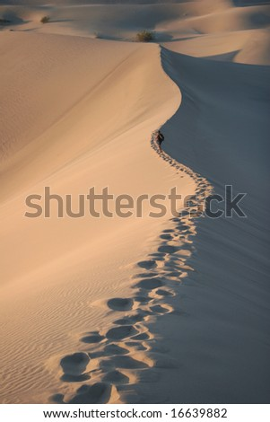 Trekking in sand dunes. Sunrise. Stovepipe Wells. Death Valley national park. California. USA - stock photo