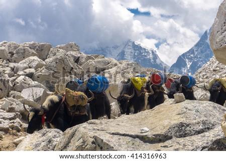 Trekking to Everest Base Camp - stock photo