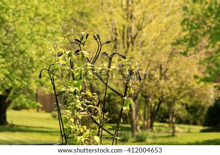 Trellis; trees and bushes in the background - stock photo