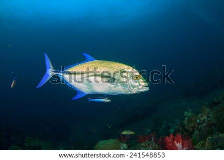 Trevally Fish - stock photo