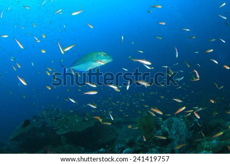 Trevally fish hunting over coral reef - stock photo