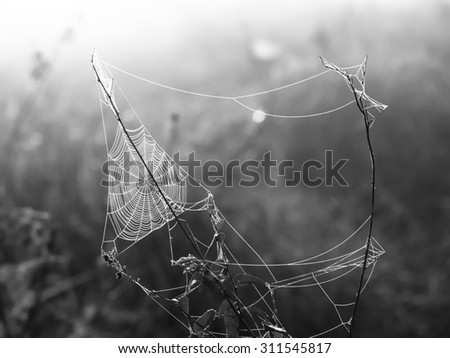 Triagle spider web on a meadow illuminated by rising sun, black and white image - stock photo
