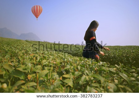 Tribe woman pick tea leaves in tea plantation. with traditional clothes at Chiang Rai Province North of Thailand and colorful hotair balloon - stock photo
