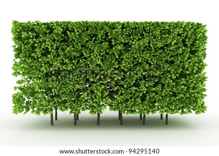 trimed shrub fence isolated on white - stock photo