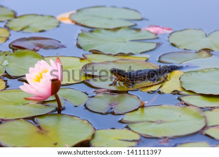Triton near water lilies - stock photo