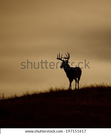 Trophy Whitetail Buck Silhouette - stock photo