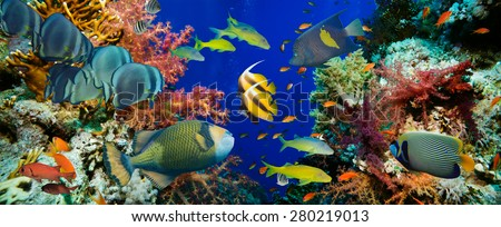 Tropical Anthias fish with net fire corals on Red Sea reef underwater - stock photo